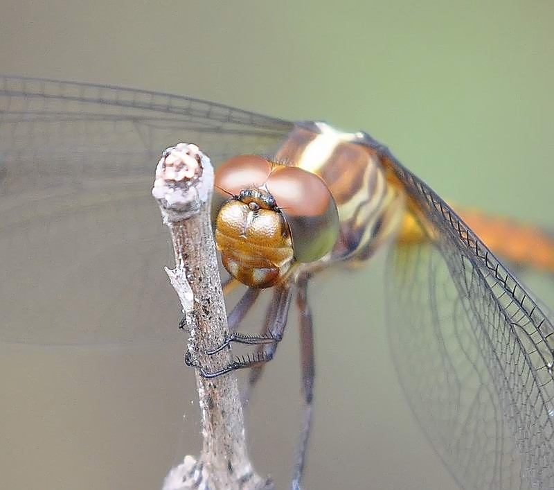 Closeup Libel