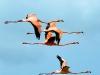Flamingo\'s